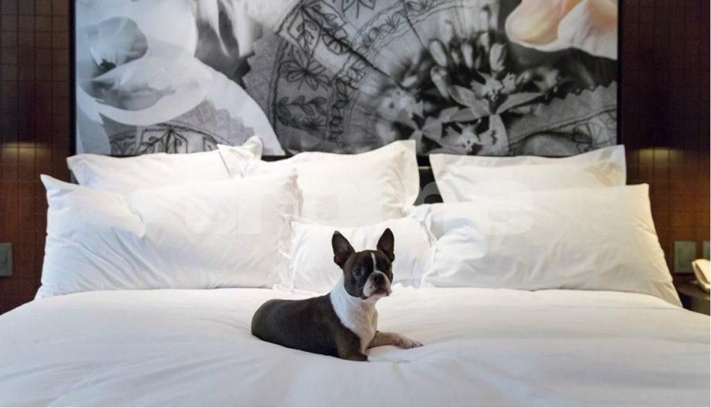 Perro dormido en una cama matrimonial con edredón blanco