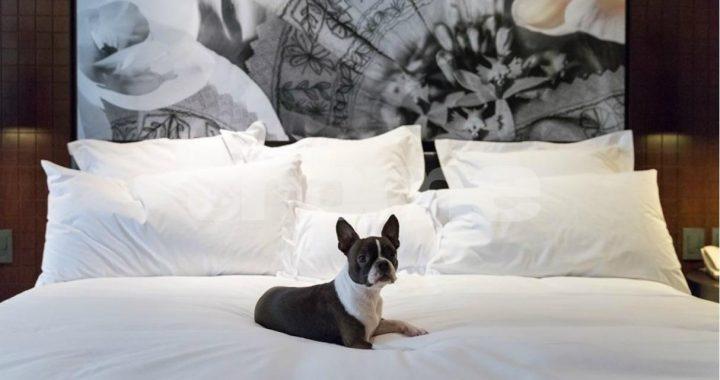 ¿Dejas dormir a tus mascotas contigo?